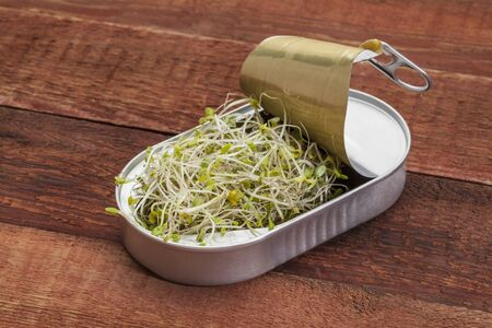 red clover: opening tin can with broccoli, radish and clover sprouts growing inside,  red rustic barn wood  table - healthy food concept Stock Photo