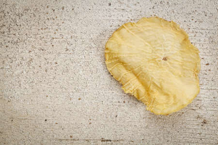 promotes: Una rebanada de secado de yac�n en blanco grunge pintado de madera con espacio de copia. El yac�n contiene inulina, un az�car complejo, que promueve los probi�ticos saludables. Foto de archivo