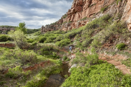 redstone: senior male backpacker hiking through sandstone canyon with a stream and green lush vegetation