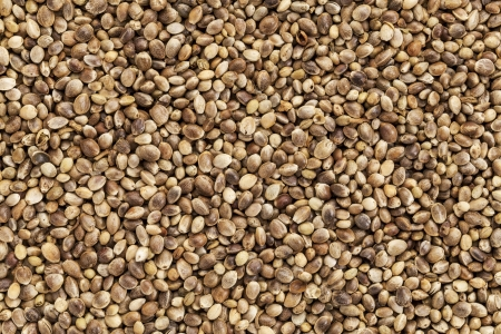 hemp hemp seed: background of organic dried hemp seeds Stock Photo