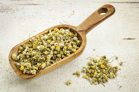 organic chamomile herbal tea - rustic wooden scoop and a pile on rough white painted barn wood