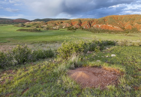 Colorado mountain ranch in early summer with ant cone nest - Red Mountain Open Space near Fort Collins Stock Photo - 21642263