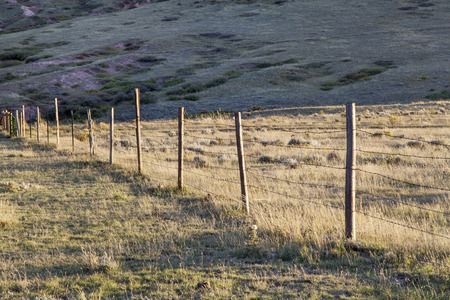 cattle wire wire: barbed wire cattle fence in Colorado mountain ranch - late summer or fall