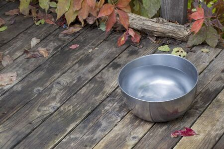bowl water: a metal water bowl for a dog on wooden deck with vine foliage