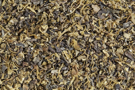 dried Irish moss seaweed (Chondrus crispus)  rich in iodine.  It is harvested to make carrageenan, a thickening agent for jellies, puddings, and soups, and is a traditional herbal remedy in Ireland. Stock Photo - 24959905