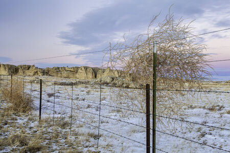 calm winter dusk over prairie in northern Colorado with with a cattle fence and tumbleweed Stock Photo - 24985541