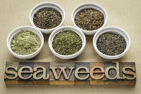 bowls of seaweed diet supplements (bladderwrack, sea lettuce, kelp powder, wakame and Irish moss) with letterpress wood typography Stock Photo - 24985549