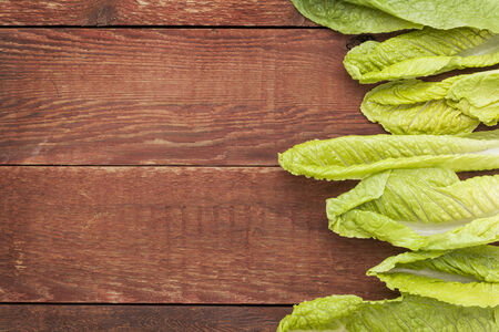 cos: fresh green leaves of romaine lettuce  against a grunge rustic barn wood table with a copy space Stock Photo