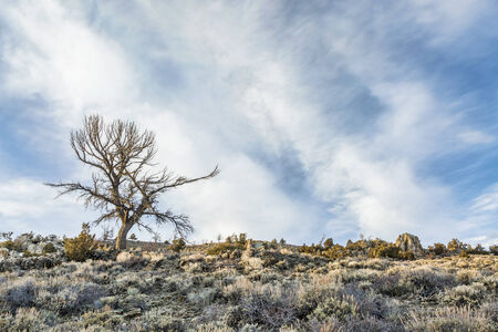 sagebrush: silhouette of a dead tree against field of sagebrush and rocks in North Park, Colorado Stock Photo