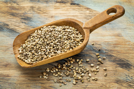 a rustic scoop of hemp seeds against a grunge painted wood background Фото со стока