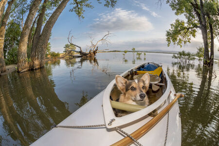 loveland: Corgi dog in a decked expedition canoe on a lake in Colorado, a distorted wide angle fisheye lens perspective, Lone Tree reservoir near Loveland, Colorado Stock Photo