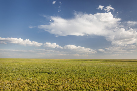 pawnee grassland: short grass prairie in springtime - Pawnee National Grassland in Weld County, north eastern Colorado