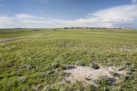 pawnee grassland: fox den in Pawnee National Grassland in northern Colorado