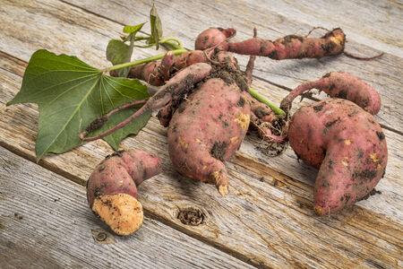 batata: un mont�n de batata fresca cosechada de un jard�n frente a la mesa de madera r�stica Foto de archivo