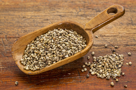 hemp hemp seed: hemp seeds on a rustic wooden scoop against grunge wood table