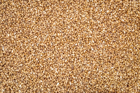 gluten free teff grain background - important food grain in Ethiopia and Eritrea Banco de Imagens