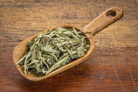substitute: stevia dried leaves in a rustic wooden scoop- natural sweetener, sugar substitute