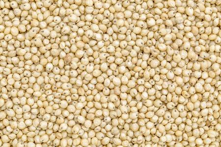 sorgo: fondo y la textura de grano de sorgo gluten libre