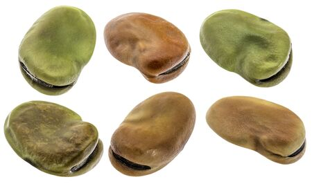 broad bean: fava (broad) bean - six seeds isolated with clipping paths Stock Photo