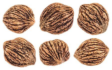 set of six organic black walnuts in shells.