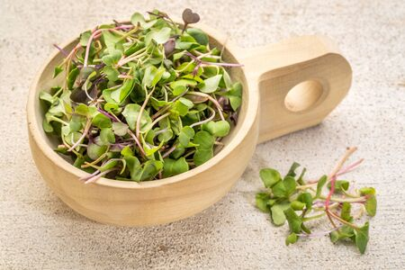organic micro greens (kale, mustard, pea, herbs) on a  primitive wooden scoop against grunge bran wood Stock Photo