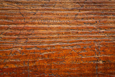 grained: background texture of  grained, scratched, grunge wood board