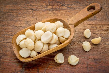 macadamia nut: macadamia nuts on a rustic, wooden scoop against grunge wood