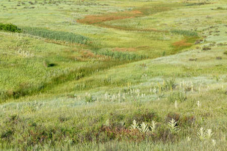 arroyo: green prairie with wildflowers at Rocky Mountains foothills near Fort Collins, Colorado
