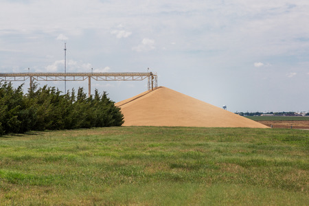 grain fields: big pile of  hard red winter wheat at grain elevator at Kansas backcountry - agriculture landscape