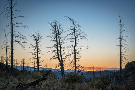 collins: Pine trees burned by 2012 Hewlett Gulch Wildfire at Greyrock near Fort Collins, Colorado, silhouette against sunset sky.