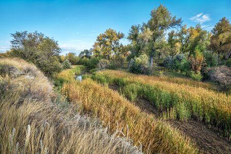 cache la poudre river: old river channel, swamp and riparian forest along the Cache la Poudre River in eastern Colorado, fall scenery Stock Photo