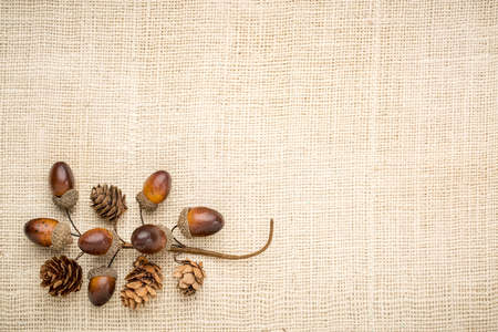 acorn nuts: acorns and cones fall decoration against burlap canvas with a copy space