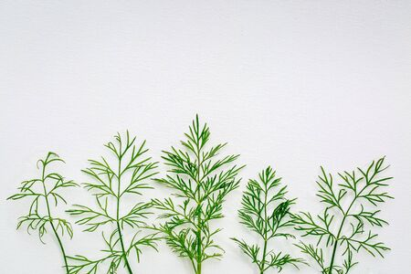 fresh green dill herb on white art canvas with a copy space