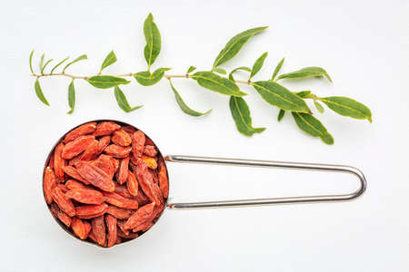 metal measuring scoop of dried goji berries against white art canvas with a green goji bush twig