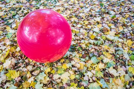 large purple Swiss exercise ball outdoors with maple leaves 스톡 사진
