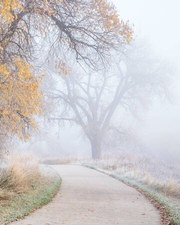 fog and frost on a bike trail  - November morning on the Poudre River Trail near WIndsor, Colorado,