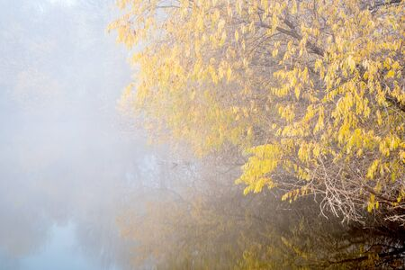 fog over lake on November morning along the Poudre River Trail in  Colorado, 스톡 사진