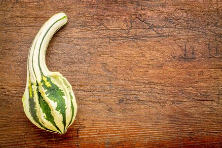 space wood: small ornamental gourd over rustic weathered wood with a copy space Stock Photo