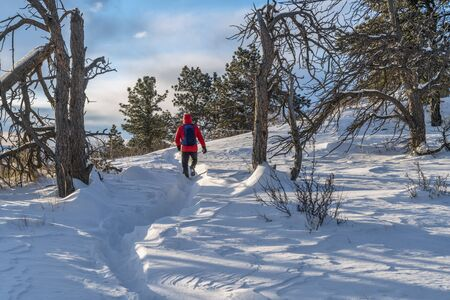 eenzame wandelaar op proef bij de uitlopers van Colorado, de winter 's morgens met de wind waait sneeuw Stockfoto