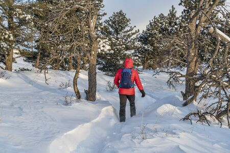 foothills: lonely male hiker on trail at Colorado foothills, winter morning with wind a deep snow