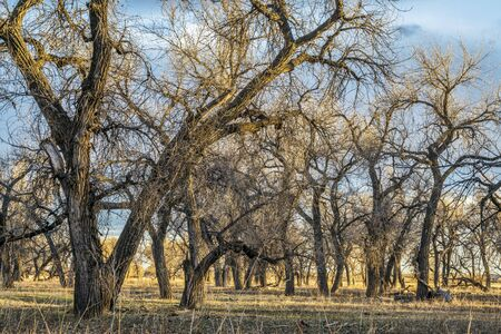south platte river: riparian forest ans pasture along South Platte River in eastern Colorado, early spring scenery in sunset light