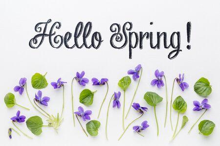 新鮮なビオラの花と白いアート キャンバス上葉こんにちは春のご挨拶