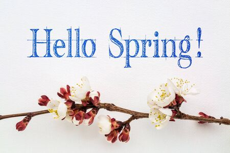 apricot tree: Hello Spring  - handwriting on white art canvas with apricot tree flower