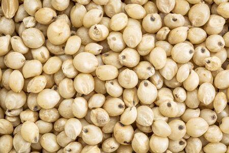 sorgo: fondo y la textura del grano de sorgo sin gluten, de tama�o natural macro