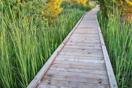 boardwalk trail: nature trail over swamp - wooden boardwalk path in a early summer scenery - a journey metaphor