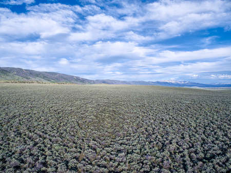 sagebrush: field of sagebrush aerial view - North Park, Colorado at foothills of Medicine Bow Mountains