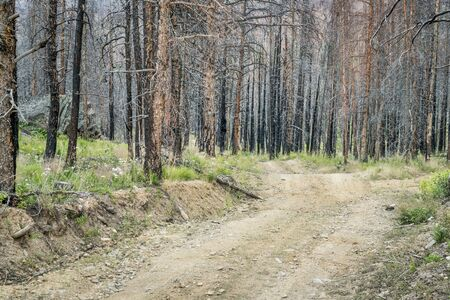 Old Flowers Road and a forest burned by wildfire.Is is a popular jeep trail in Roosevelt National Forest near Fort Collins, Colorado