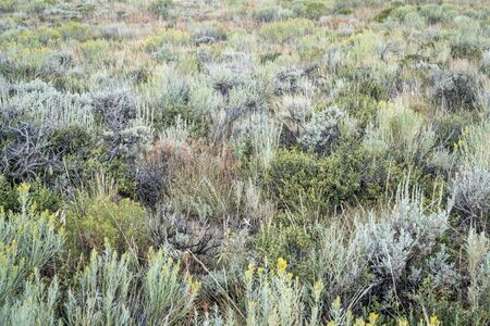 late summer tapestry of wildflowers, sagebrush and other shrubs in North Park of Colorado Фото со стока