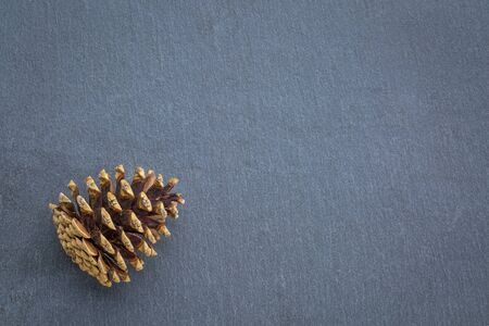 cone: pine cone on gray slate stone with a copy space