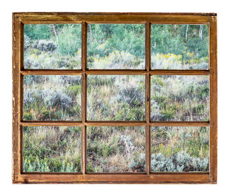 aspen grove: late summer tapestry of Colorado aspen, wildflowers and shrubs as seen from a sash window of old cabin
